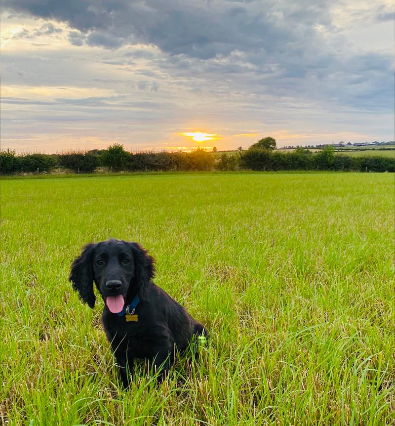 Dog friendly accommodation Cotswolds