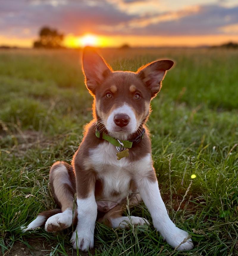 Dog friendly holiday accommodation Cotswolds