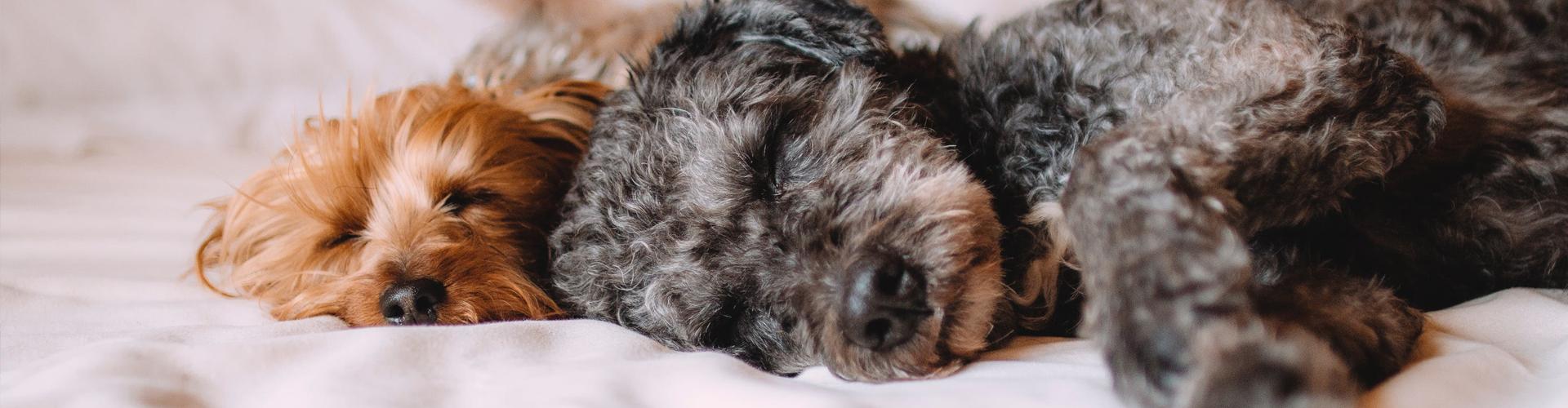 Pet friendly holiday accommodation Cotswolds